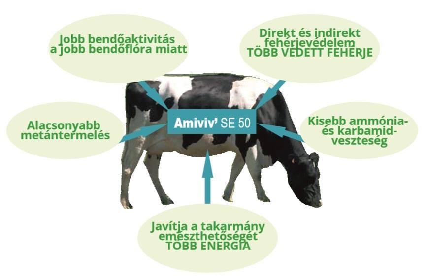 Amiviv SE előnyök - Impavidus Trade Zrt