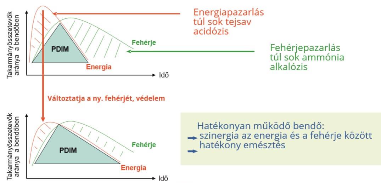 Amiviv SE hatékonyság - Impavidus Trade Zrt
