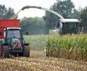 mikotoxin a kukorica szilázsban