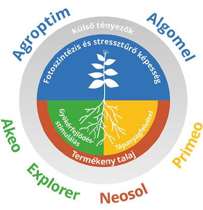 Növényes ábra - Impavidus Trade