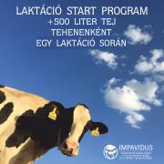 Szarvasmarha laktáció start program