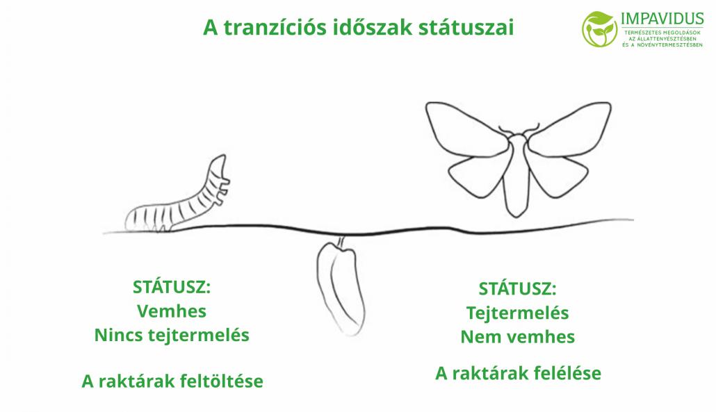 Laktáció tranzíciós időszak